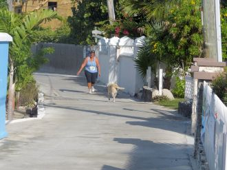 Turtle_Trot_Hopetown_Abaco_2015_20151126_0425