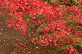 Yet more beautiful colours - red. . .