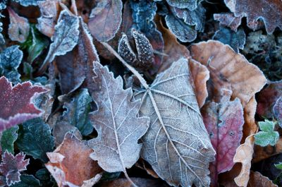 First frost of winter