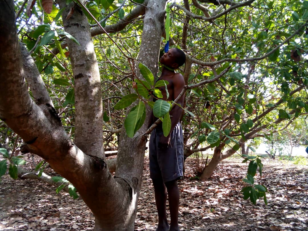SUICIDE: Man Hangs Himself In A Cashew Farm At Kintampo