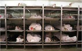 Stolen Corpses Parts In Ghana Mortuaries, Who Is Responsible?