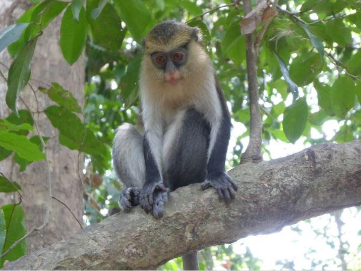 Rainfall destroys Tafi Atome Monkey Sanctuary