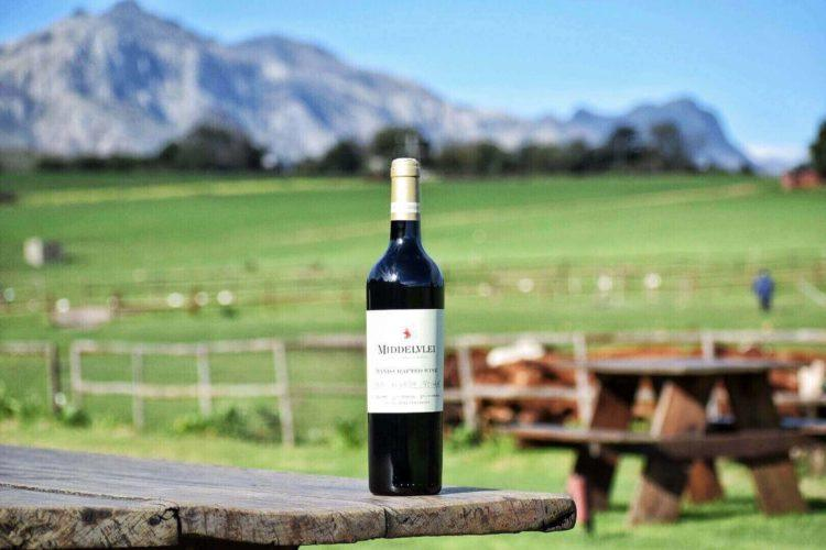 wine tours in Stellenbosch