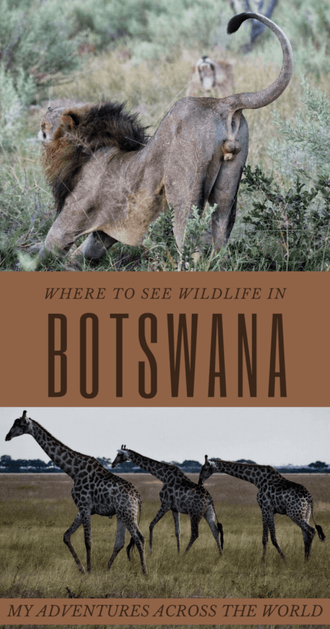 Discover where to see the best wildlife in Botswana - via @clautavani
