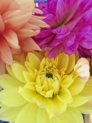 Beautiful blooms brightening up my rainy Monday morning