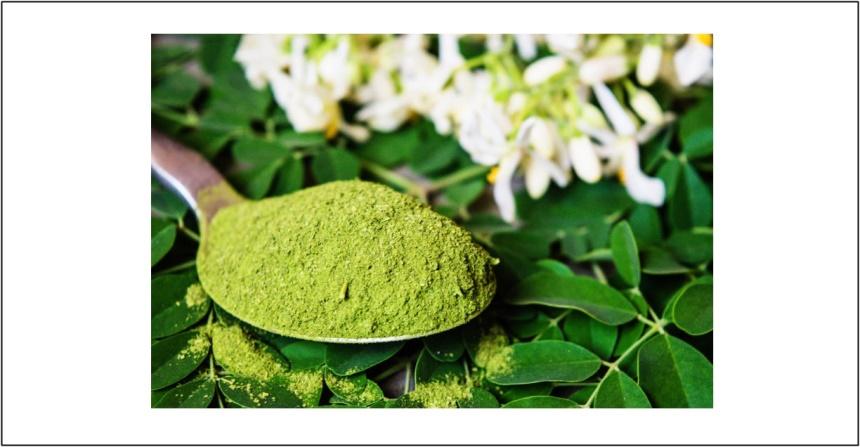 Santé/ le Moringa : plante miracle