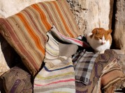 A stray kitty sits on colorful rugs in Göreme.