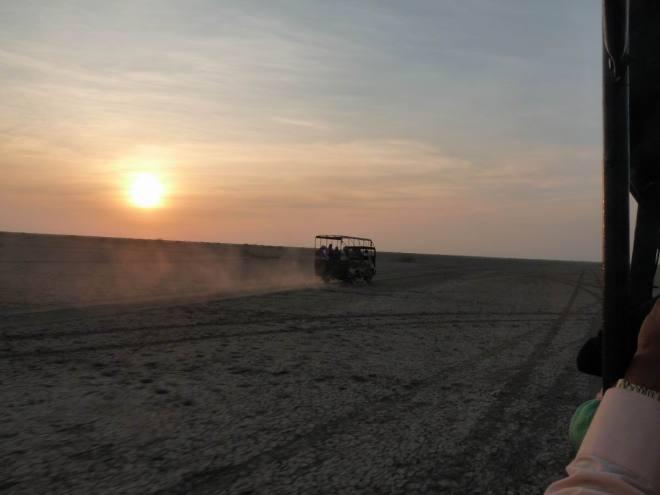Desert Safari - little rann of kutchh