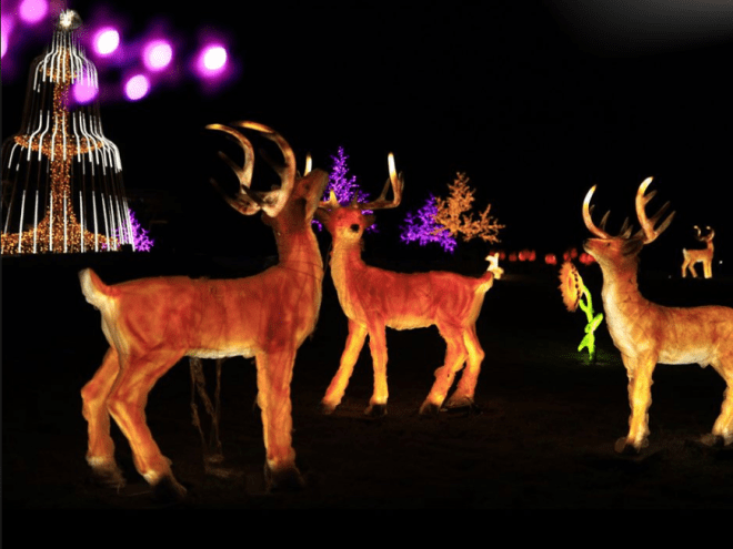 glow garden at statue of unity