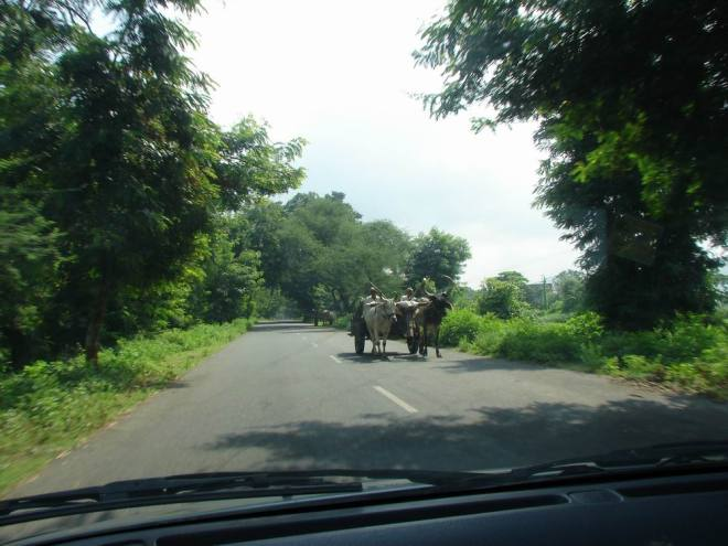 Bullock cart in polo forest