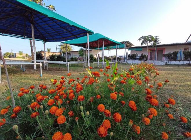 Polo Tent Stay Garden Area