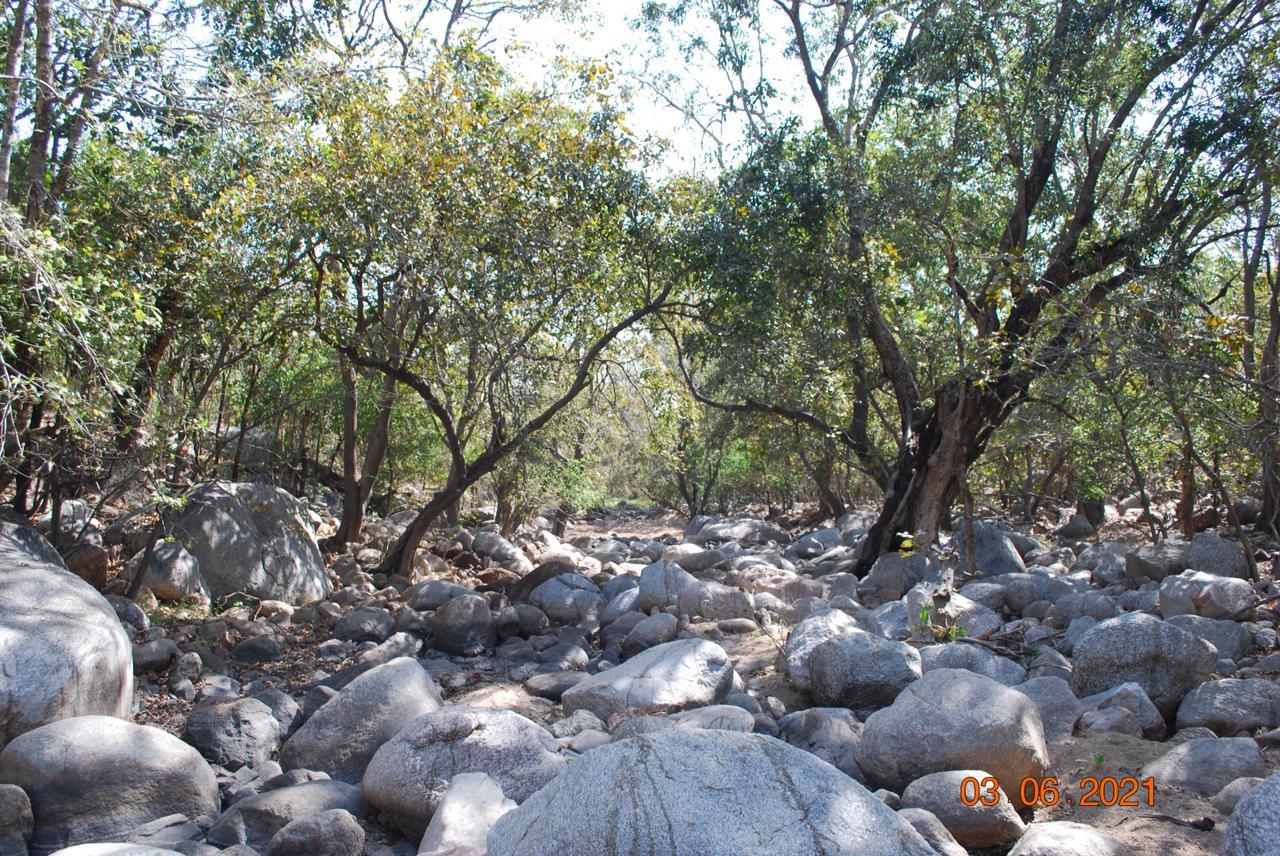 Jessore HillsDried river Jessore hill