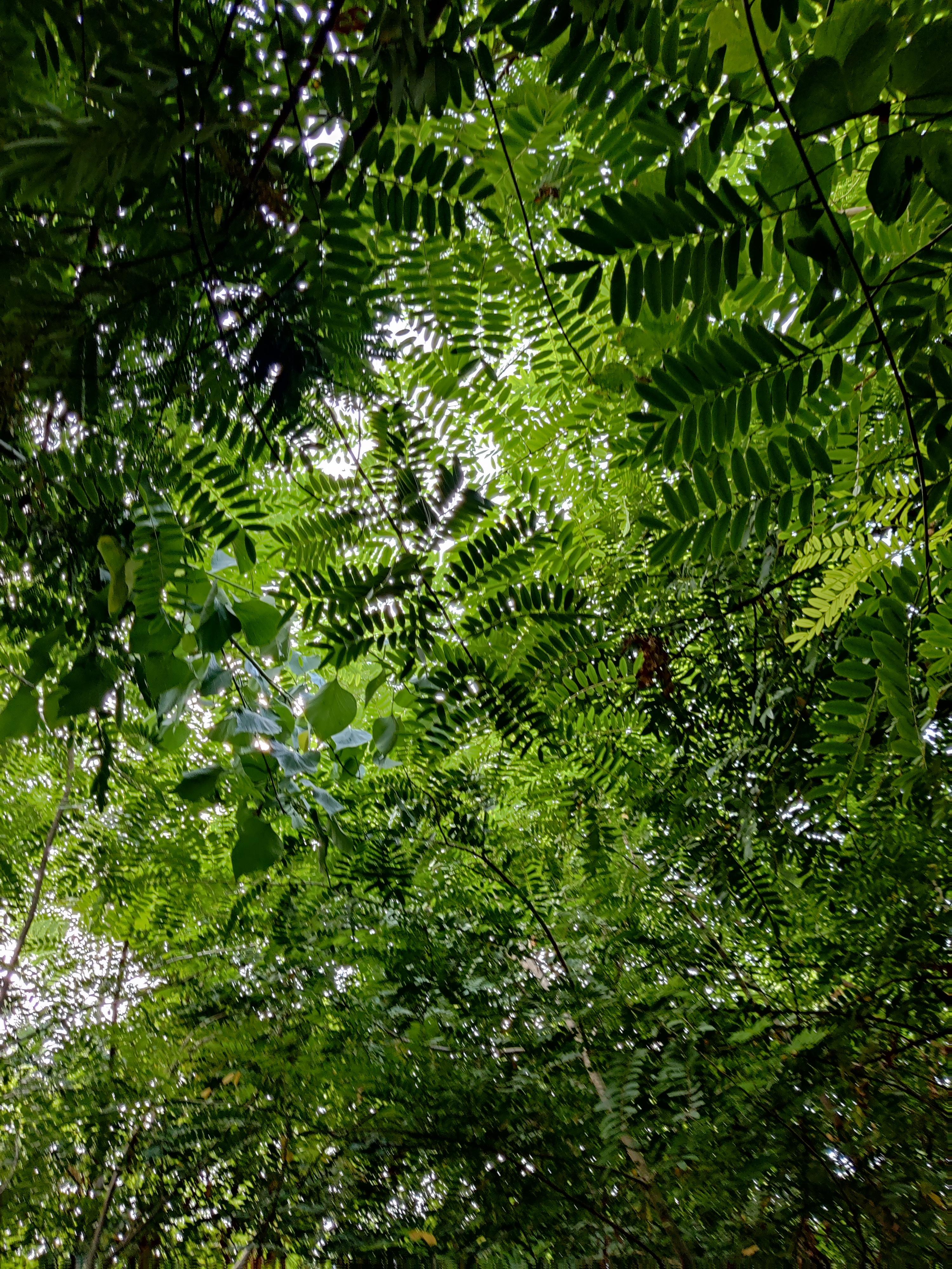 Forest feeling in oxygen park