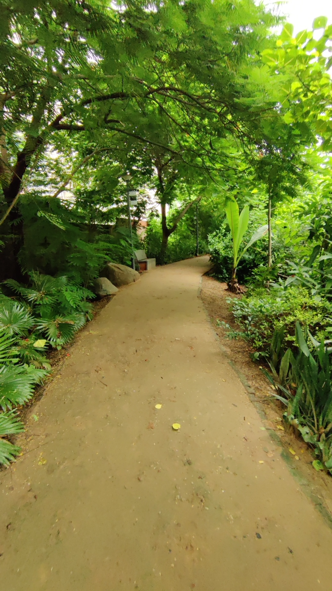 Walking trail at symphony forest park