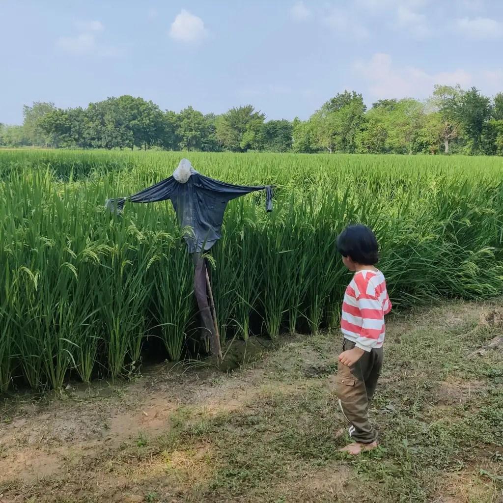 Scarecrow in village