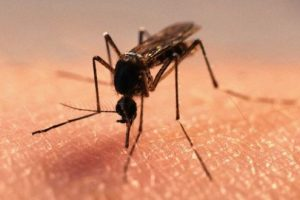 Malaria cases declining in Ghana