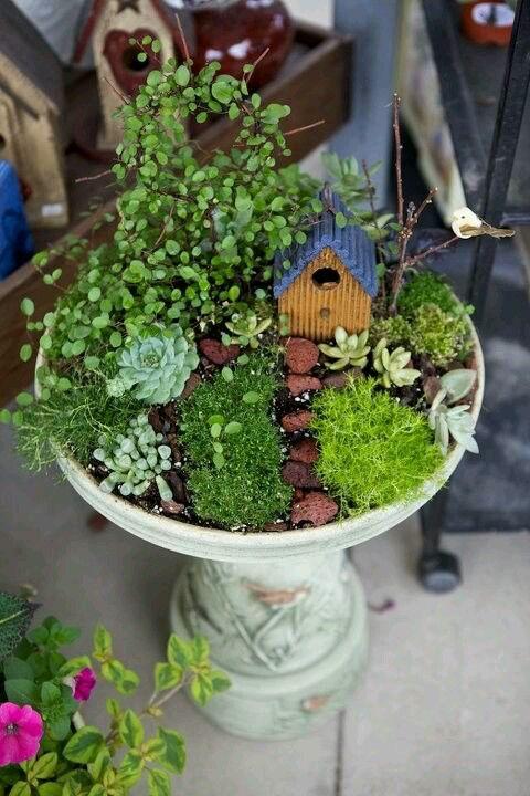 Where Buy Plant Pots