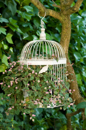 Bird Cage Planters Are Fun And Eyecatching Decor For Your