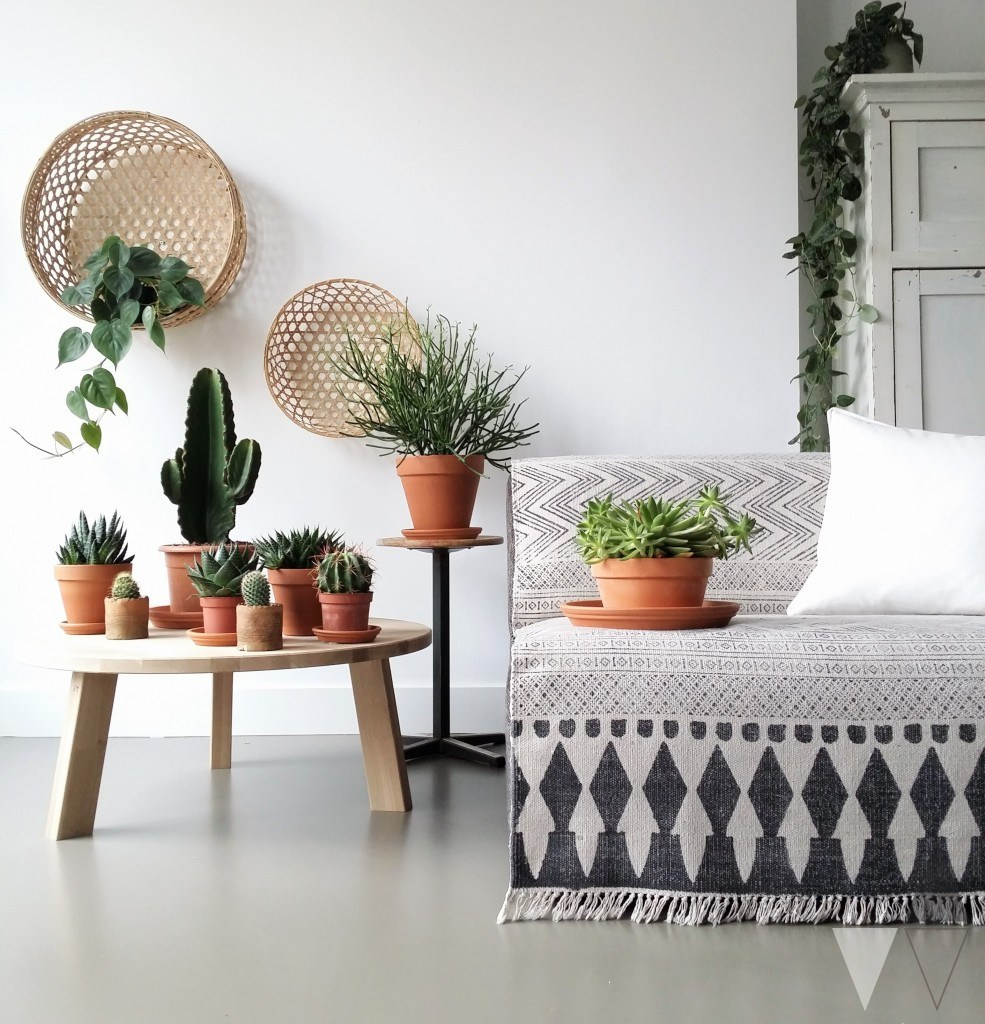 Indoor Cactus Garden Ideas To Display Your Collection In A Fantastic Way