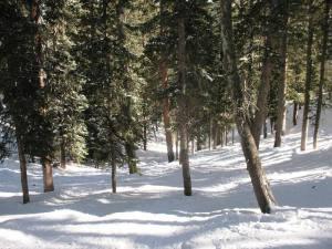 Tree skiing at Taos Ski Valley