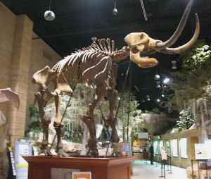 Mastodon skeleton in the main hall of The Creation Museum