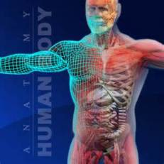 human organ system image
