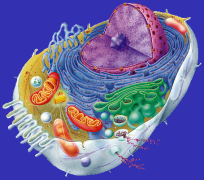 Cell Picture