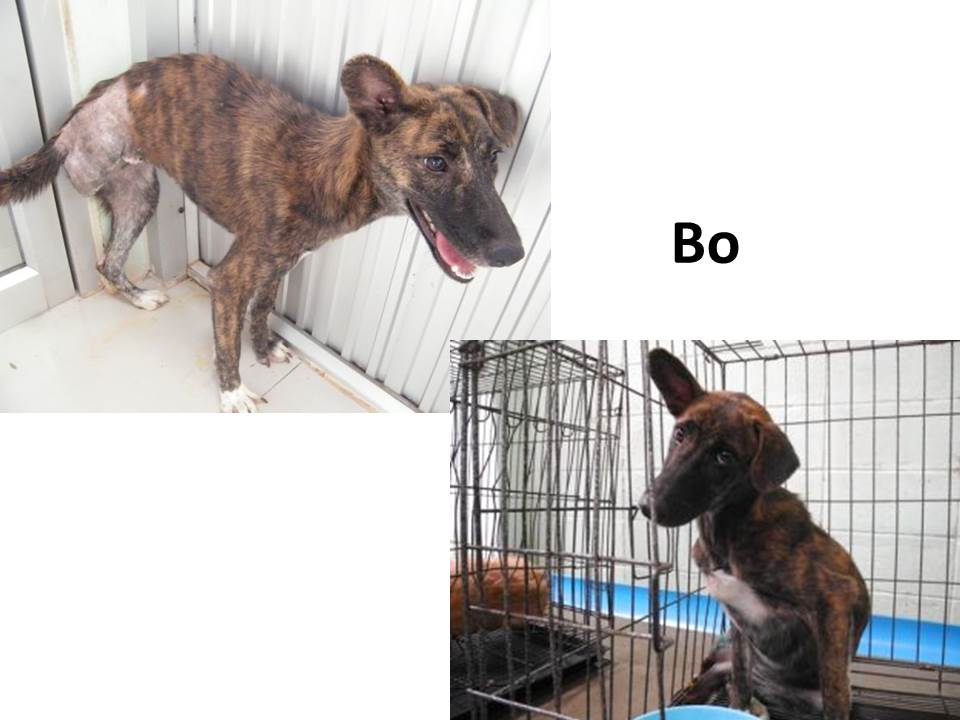 How To Adopt A Soi Dog