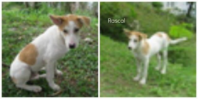 mini-Rascal pic