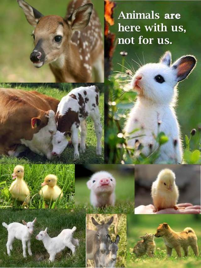 animals are here with us (1)