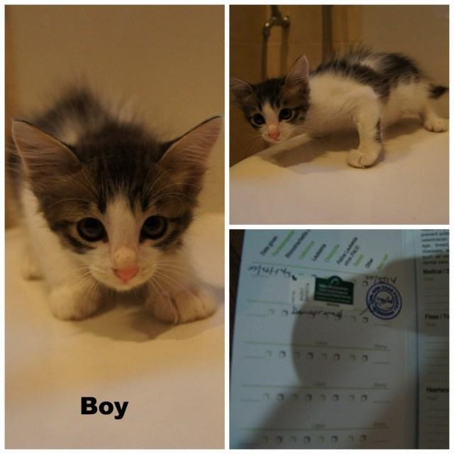 mini-Boy Pic Collage.jpg