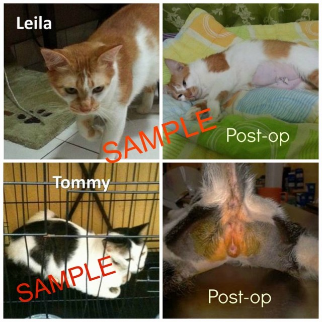 SAMPLE cat neuter