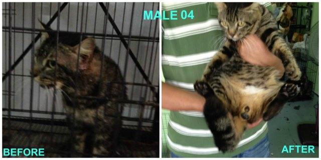 Male neutered 04
