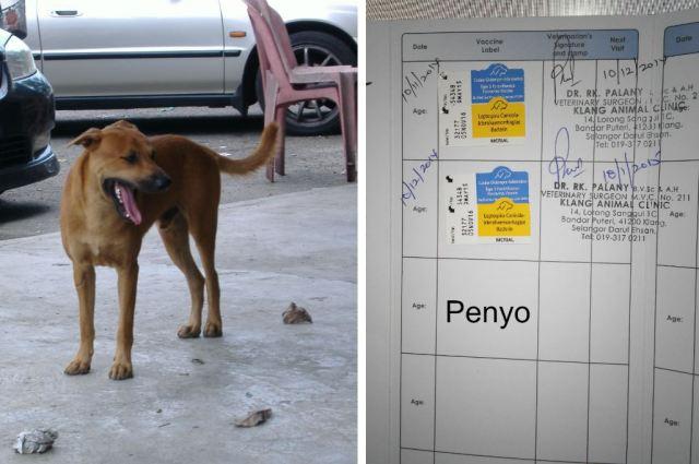 Penyo