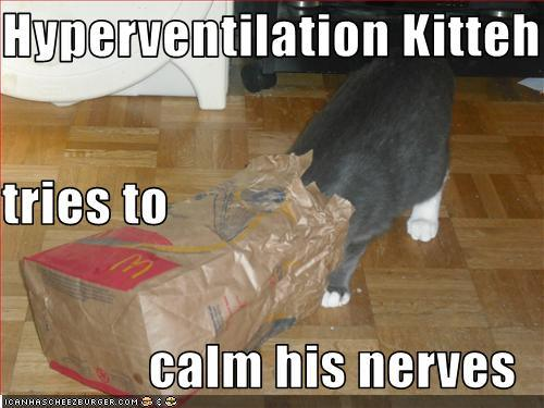 funny-pictures-cat-calms-his-nerves