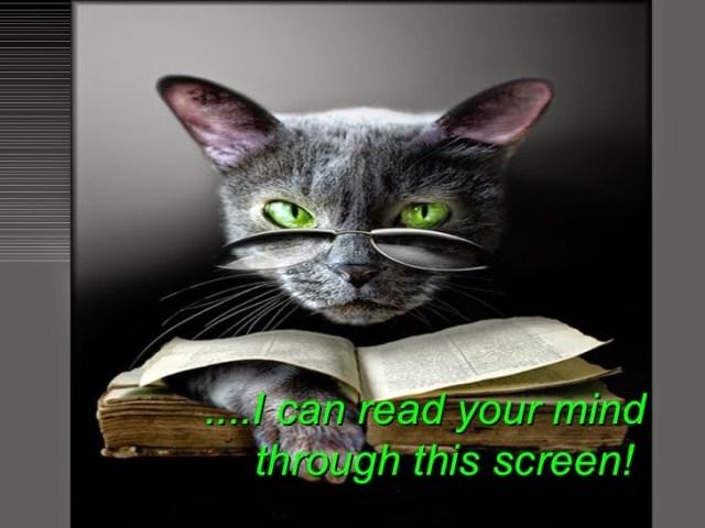 the-magic-cat-eye-8-728