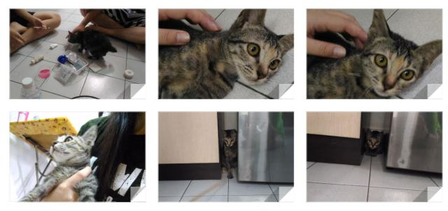 Kitten For Adoption In Melaka – Adopted! (Angela Lee's)