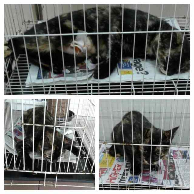 Neutering Aid For 5 Cats In Cheras (Liew Say Moy's)