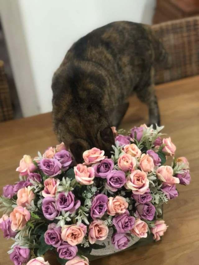 Tabs, The Flower-Girl