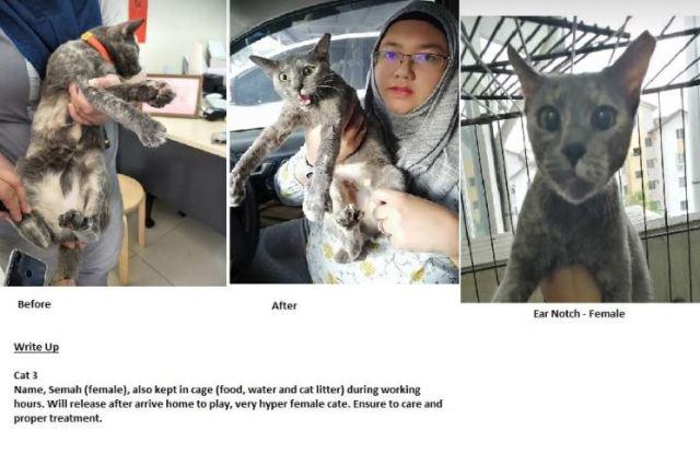 Neutering Aid For 3 Cats In Hulu Langat (Noorliza Sabarina Bt Ali Sabarmisi's)