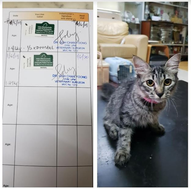 Vaccination Aid For 1 Cat In Batu Caves (Farah Diana Bt Abdul Fuad's)d
