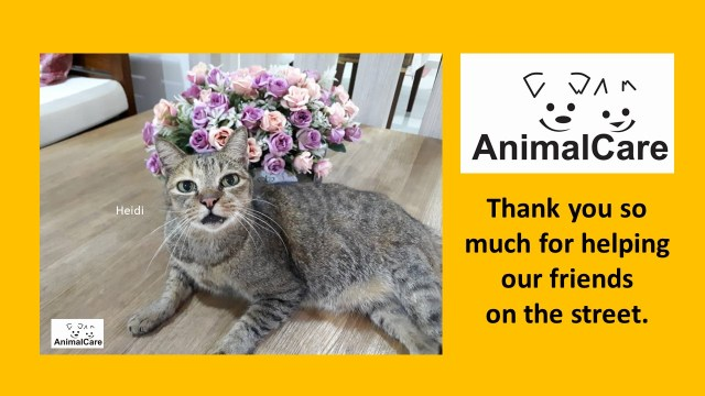 Thank You Very Much (July 2019 Donors)