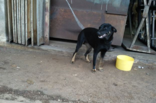 Neutering Aid For 1 Dog In Bukit Serdang (Wong Mee Foong's)