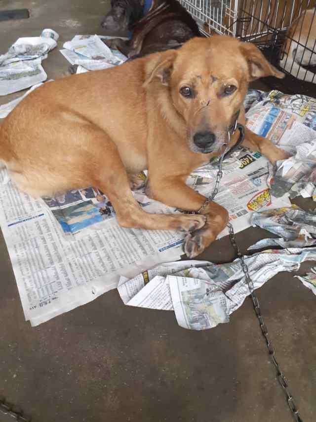 Neutering Aid For 1 Dog In Bukit Serdang (Yap Lee Fong's)