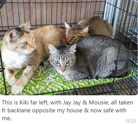 Neutering Aid For 3 Cats In Shah Alam (Lee Lay Kim's)