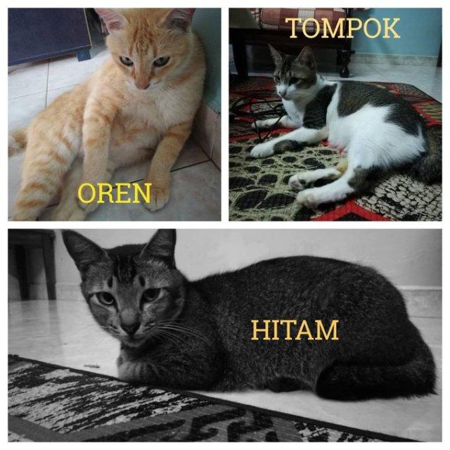 Neutering Aid For 2 Cats In Penaga, Pulau Pinang (Nurul Fithrah Bt Saad's)
