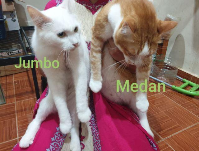 Neutering Aid For 1 Cat In Kuantan (Nor Khamisah Bt Sadi Sutan's) & Updates