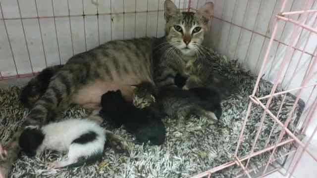 The Rescue And Adoption Of 3 Newborn Kittens