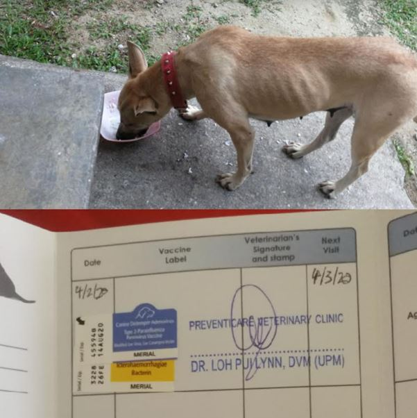 Vaccination Aid For 1 Dog In Setapak (Foo Sook Cheng's)