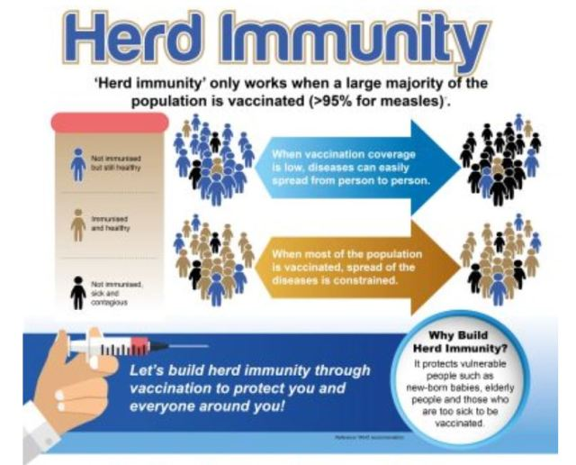 HK Dog Tests Negative For Covid19, Of Herd Immunity For Humans And Other Thoughts